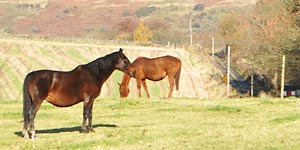 equestrainb