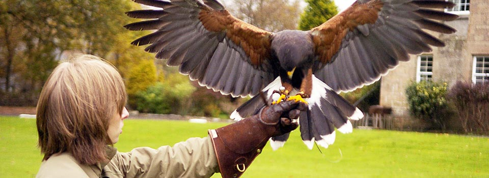 falconryb